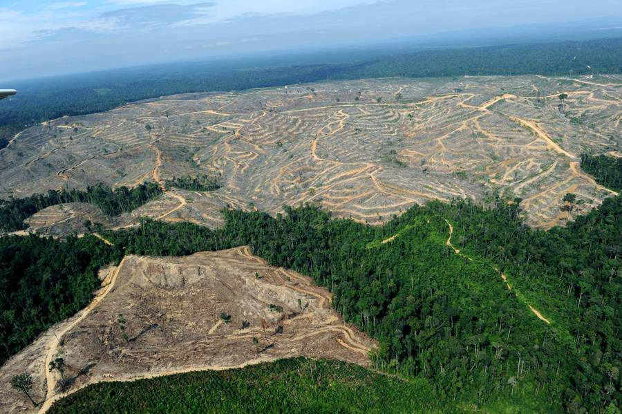 Sumatra Rise Up Project : creating alternatives to palmoil plantations