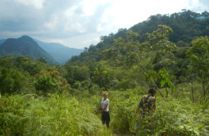 Primary rainforests conservation