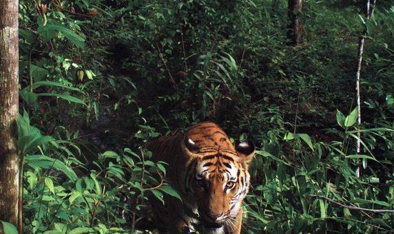 Sumatra, réservoir de biodiversité en danger