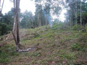 DSCN9851 ladang aceng avt