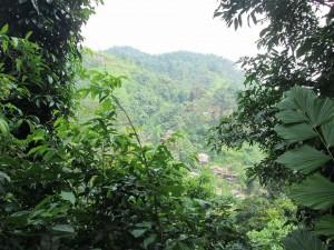 La jungle tropicale entoure le village...