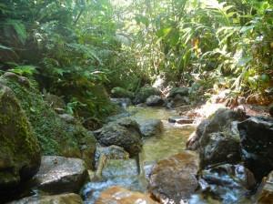 Le ruisseau, notre source d'eau et lieux de douche