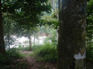 Accès au sentier qui mene à Jungle Hope Area depuis la riviere Bahorok