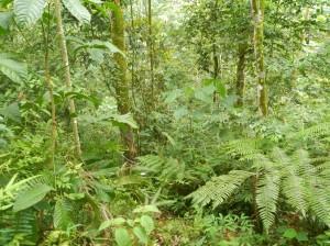 Végétation tropicale omniprésente