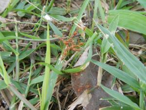 Ant / Fourmi