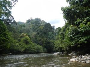 Paysage rivière / jungle
